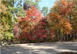 Each fall as the leaves change colors, visitors are rewarded with a spectacular showing in Tennessee, Alabama, and northern Mississippi.