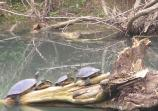 Turtles use the sun to stay warm because they cannot generate their own body heat.