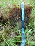 Arctic tundra soil profile showing active layer top and mineral soil bottom