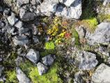 Rocks and colorful plants