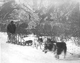 Dog Sledding Near Kennecott