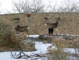 deer, wildlife, kiva, ruins