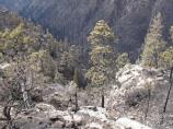 An image of the Upper Crossing Trail after the Las Conchas Fire.
