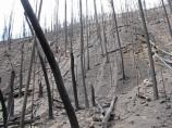 An image of Upper Crossing after the Las Conchas Fire.