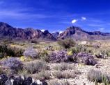 Typical view of the Chisos Mountains from the Chihuahuan Desert.