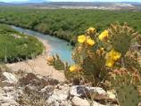 Prickly pear blooms overlooking the Rio Grande.