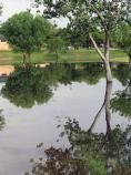 During monsoon season, some of the low-lying areas of our grounds collect runoff. This is a rare event, but for a few hours or days, we may have our very own