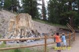Junior Rangers look at the Big Stump