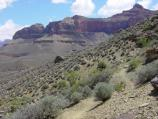D3143 WALKING EAST ALONG THE TONTO TRAIL BETWEEN INDIAN GARDENS AND THE S. KAIBAB TRAIL. GRAND CANYON N.P. NPS PHOTO.