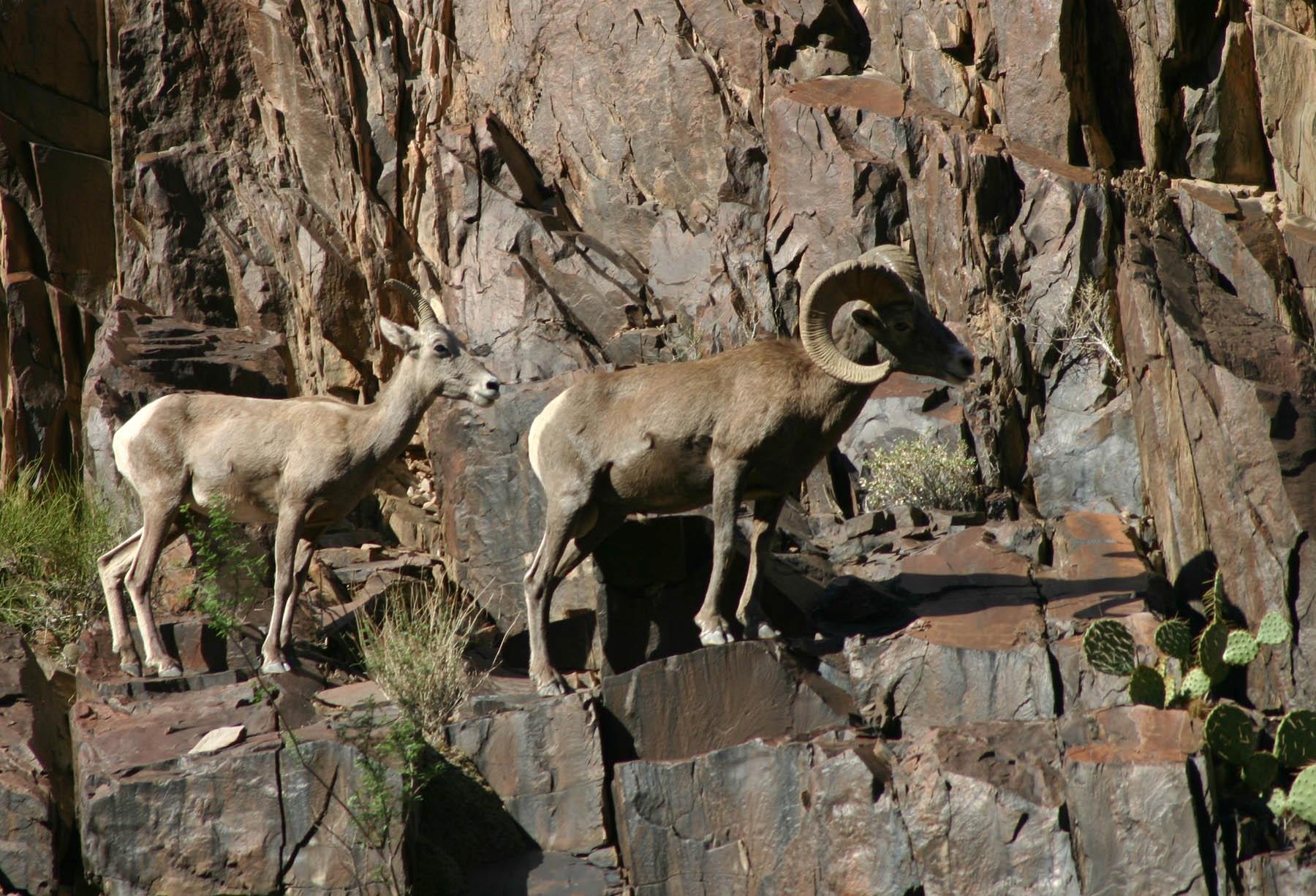 Photo Gallery (U.S. National Park Service