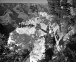 1947 Mule Party on Bright Angel Trail
