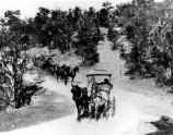 2 horse-drawn touring coaches of park visitors travel on the recently completed Hermit Rim Road. (now called the west rim drive) 05 november 1911. G.S. Smith, NFS.
