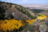 Golden aspens look like a river as they follow the Morris Gulch drainage down toward the dunes.