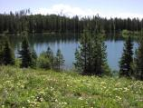 Bearpaw Lake ringed with wildflowers & conifers