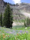 Marion Lake, cliffs, wildflowers, conifers