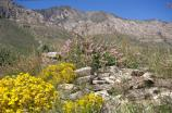 Remnants of Pinery Stage station buried in summer wildflowers.