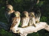 This little endangered owls just fledged the nest as the photo was taken.