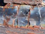 Close up of petrified wood, Petrified Forest National Park4