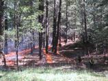 Strips of fire burning in ponderosa pine at Saguaro National Park