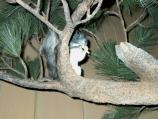 Lifelike model of Aberts squirrel in a simulated ponderosa pine tree