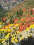 American Fork Canyon in Fall