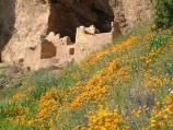 wildflowers at the Upper Cliff Dwelling