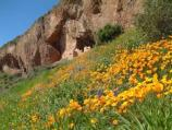 spring at the Upper Cliff Dwelling
