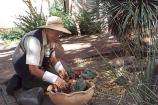 Volunteer Sue Kotz at work in the garden