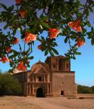 orange blossoms in foreground with church behind