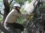 young woman in hard hat clearing brush