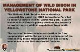 02. Management of Wild Bison in Yellowstone National Park