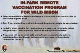 10. In-Park Remote Vaccination Program For Wild Bison