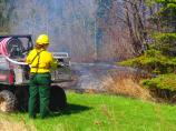 Firefighter directs water below evergreen tree.