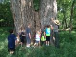 Kids explore the park's biggest tree