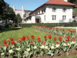 Take from the Maurice Bathhouse sidewalk, the Hale Bathhouse shows in the background with the L-shaped bed of red and yellow tulips in the foreground.