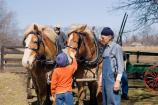 A child pets a draft horse team ready to haul maple sap from a nearby ravine.