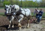 Horses & Workers plowing the land at Chellberg Farm.