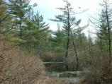 Picture of Pond at Pinhook Bog.