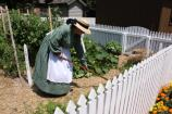 Volunteer tending to Heirloom Garden