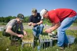 A ranger and volunteers prepare tubed plants for planting into a restoration.