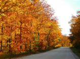 Orange and red leaves on the maples make for a beautiful drive on H-58.