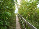 This is an example of the boardwalk to observation deck near the edge of the Empire Bluff.