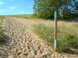Notice how the dune has moved, burying the trail marker along the Sleeping Bear Point Trail. A new marker has been attached to the top of the old marker. The US Life-Saving Station that used to be located here had to be moved because it was being buried by the dunes as they moved westward.