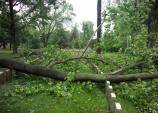 Storm Damage at Antietam National Cemetery