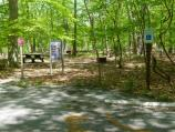 Chestnut Picnic Area path and parking for picnic table with universal access