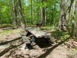Chestnut Picnic Area table and grill