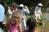 Volunteers lead a pollinator program in the community garden