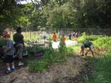 Living Classrooms helping out in the Fort Dupont Demonstration Garden