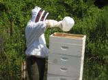 Occasionally bee Keepers may need to feed the hive depending on drought conditions.