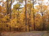 a picture of trees in the campground with the trees turning to yellow